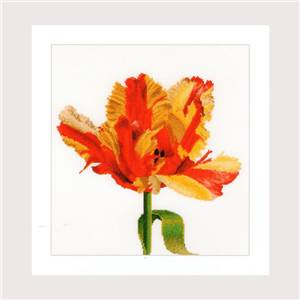 Red Yellow Parrot Tulip (kit) - Thea Gouverneur
