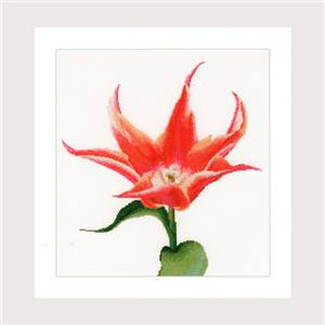 Lily Flowering Tulip (kit) - Thea Gouverneur
