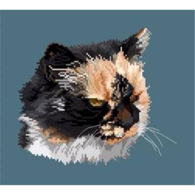 Portrait de chat V diagramme couleur - Orbis Pictura
