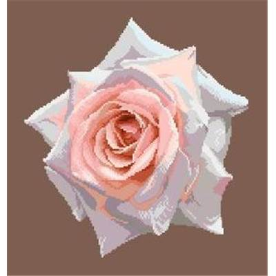 Portrait de rose X diagramme noir et blanc - Orbis Pictura